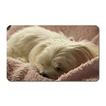 Maltese Sleeping Magnet (Rectangular) Front