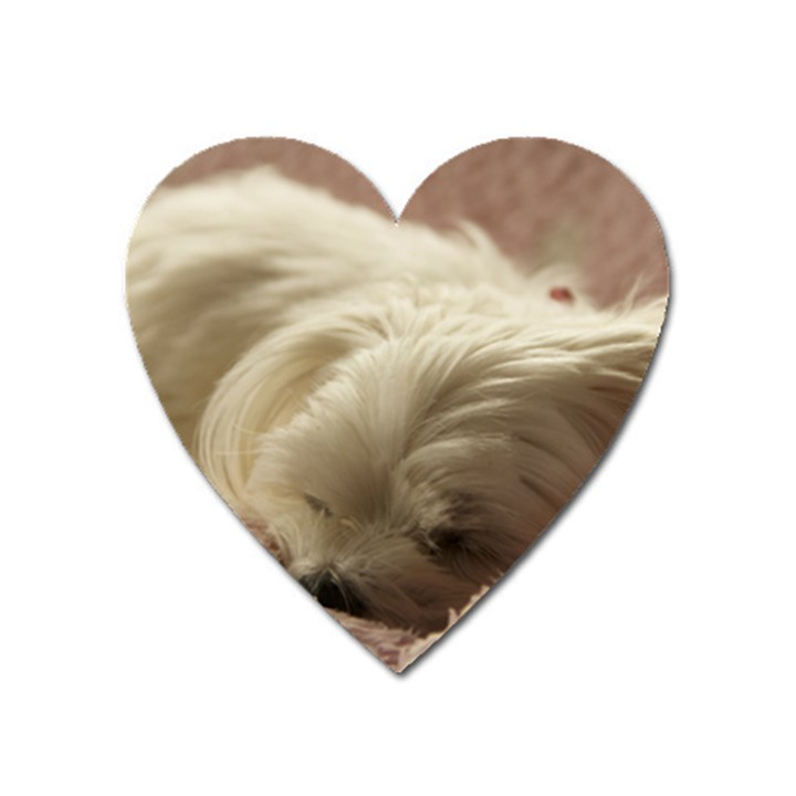 Maltese Sleeping Heart Magnet