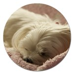Maltese Sleeping Magnet 5  (Round) Front