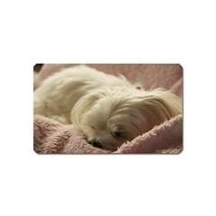 Maltese Sleeping Magnet (Name Card)