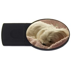 Maltese Sleeping USB Flash Drive Oval (1 GB)