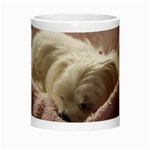 Maltese Sleeping Morph Mugs Center
