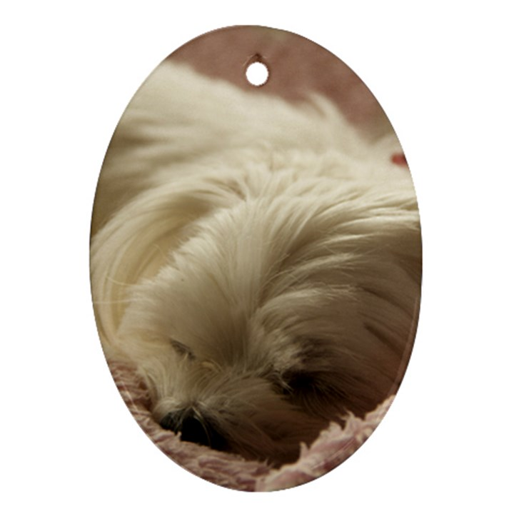 Maltese Sleeping Oval Ornament (Two Sides)
