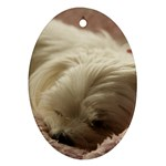 Maltese Sleeping Oval Ornament (Two Sides) Back