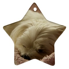 Maltese Sleeping Star Ornament (Two Sides)