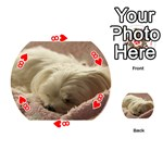 Maltese Sleeping Playing Cards 54 (Round)  Front - Heart8