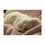 Maltese Sleeping Small Memo Pads 3.75 x3.75  Memopad