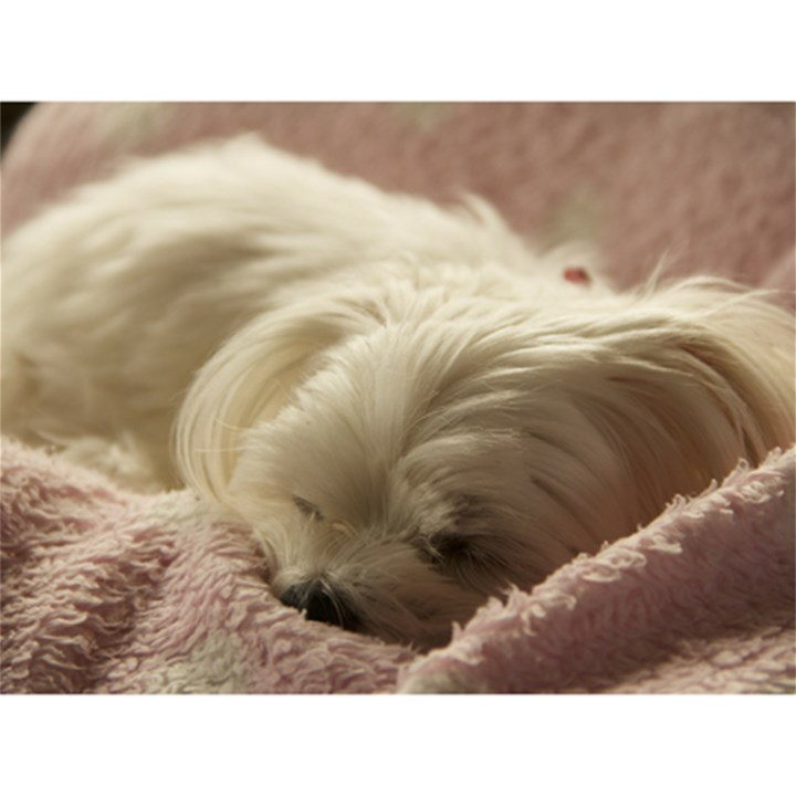 Maltese Sleeping Magic Photo Cubes