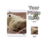 Maltese Sleeping Playing Cards 54 (Mini)  Front - Spade7