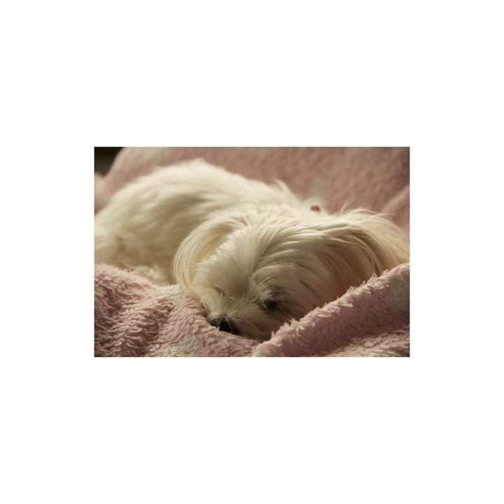Maltese Sleeping YOU ARE INVITED 3D Greeting Card (8x4)