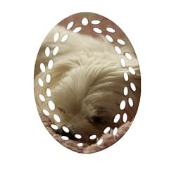 Maltese Sleeping Ornament (Oval Filigree)