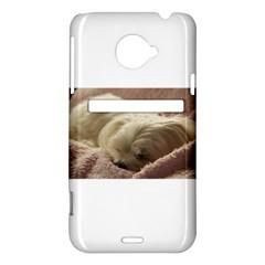 Maltese Sleeping HTC Evo 4G LTE Hardshell Case