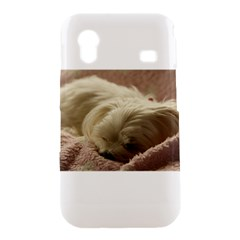 Maltese Sleeping Samsung Galaxy Ace S5830 Hardshell Case