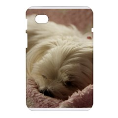 Maltese Sleeping Samsung Galaxy Tab 7  P1000 Hardshell Case