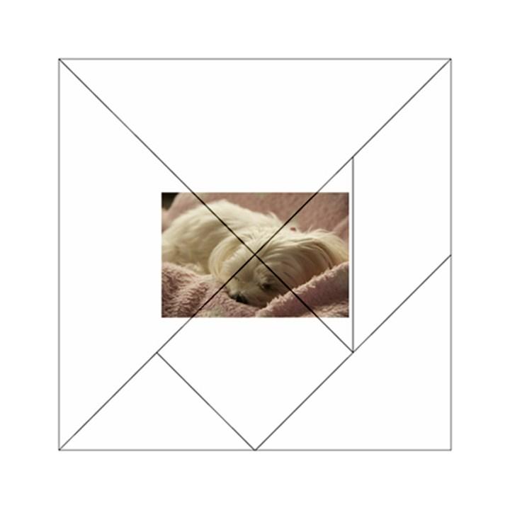 Maltese Sleeping Acrylic Tangram Puzzle (6  x 6 )