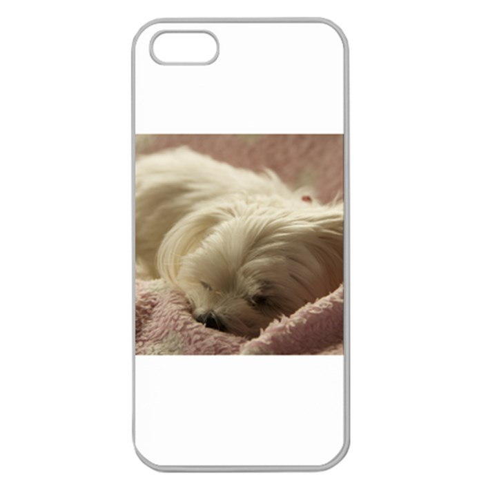 Maltese Sleeping Apple Seamless iPhone 5 Case (Clear)