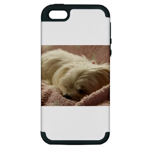 Maltese Sleeping Apple iPhone 5 Hardshell Case (PC+Silicone)