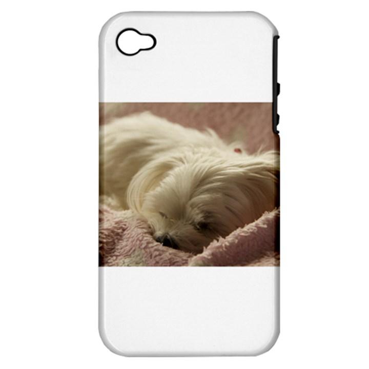 Maltese Sleeping Apple iPhone 4/4S Hardshell Case (PC+Silicone)