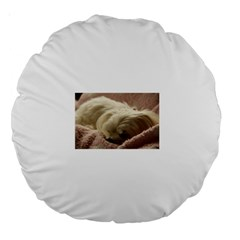 Maltese Sleeping Large 18  Premium Round Cushions