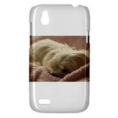 Maltese Sleeping HTC Desire V (T328W) Hardshell Case
