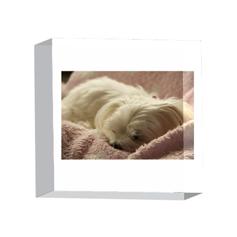 Maltese Sleeping 4 x 4  Acrylic Photo Blocks