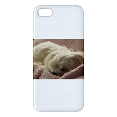 Maltese Sleeping iPhone 5S/ SE Premium Hardshell Case