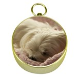 Maltese Sleeping Gold Compasses Front