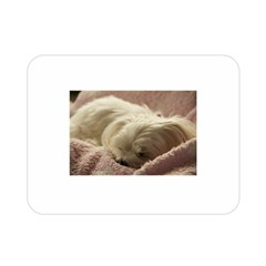Maltese Sleeping Double Sided Flano Blanket (Mini)
