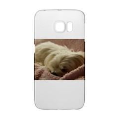 Maltese Sleeping Galaxy S6 Edge