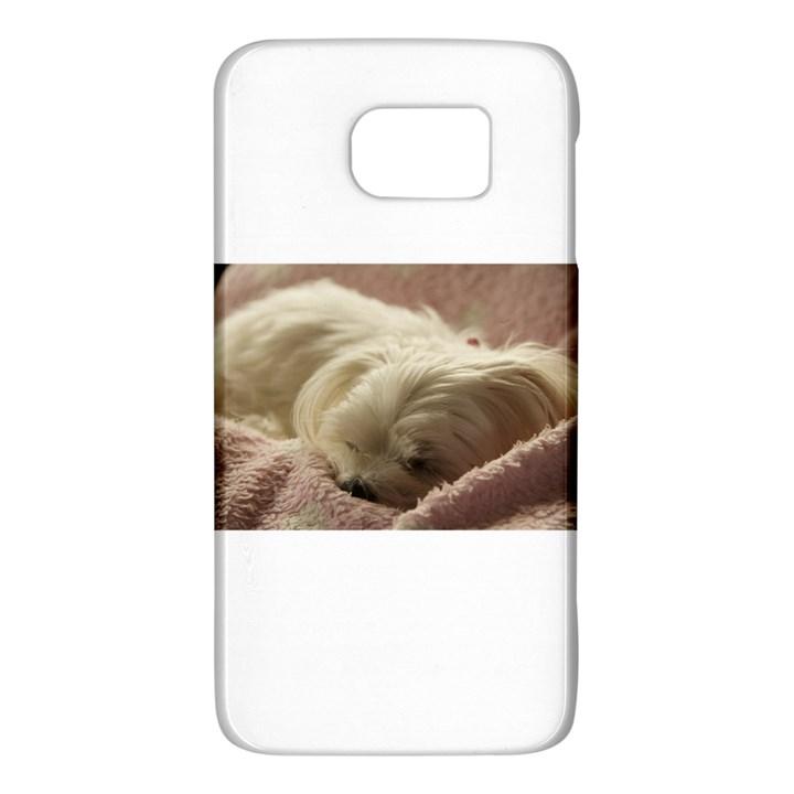 Maltese Sleeping Galaxy S6