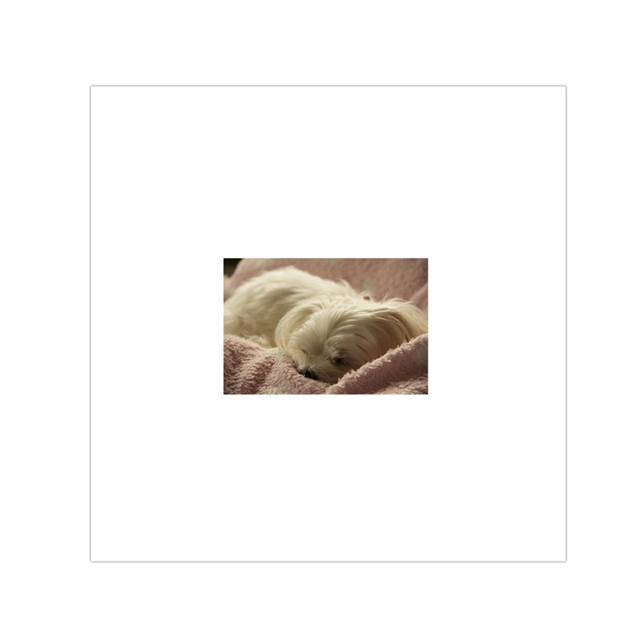 Maltese Sleeping Small Satin Scarf (Square)