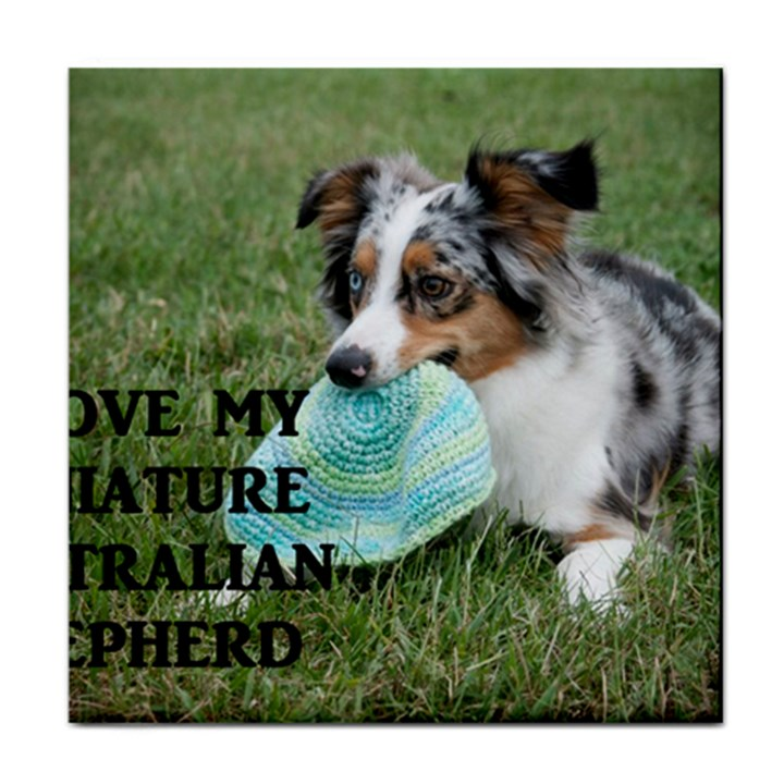 Blue Merle Miniature American Shepherd Love W Pic Tile Coasters