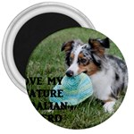 Blue Merle Miniature American Shepherd Love W Pic 3  Magnets Front