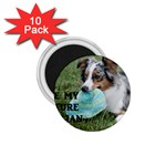 Blue Merle Miniature American Shepherd Love W Pic 1.75  Magnets (10 pack)  Front