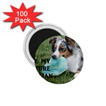 Blue Merle Miniature American Shepherd Love W Pic 1.75  Magnets (100 pack)  Front