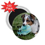 Blue Merle Miniature American Shepherd Love W Pic 2.25  Magnets (100 pack)  Front