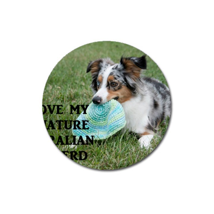 Blue Merle Miniature American Shepherd Love W Pic Magnet 3  (Round)