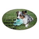 Blue Merle Miniature American Shepherd Love W Pic Oval Magnet Front