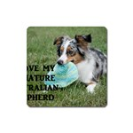 Blue Merle Miniature American Shepherd Love W Pic Square Magnet Front