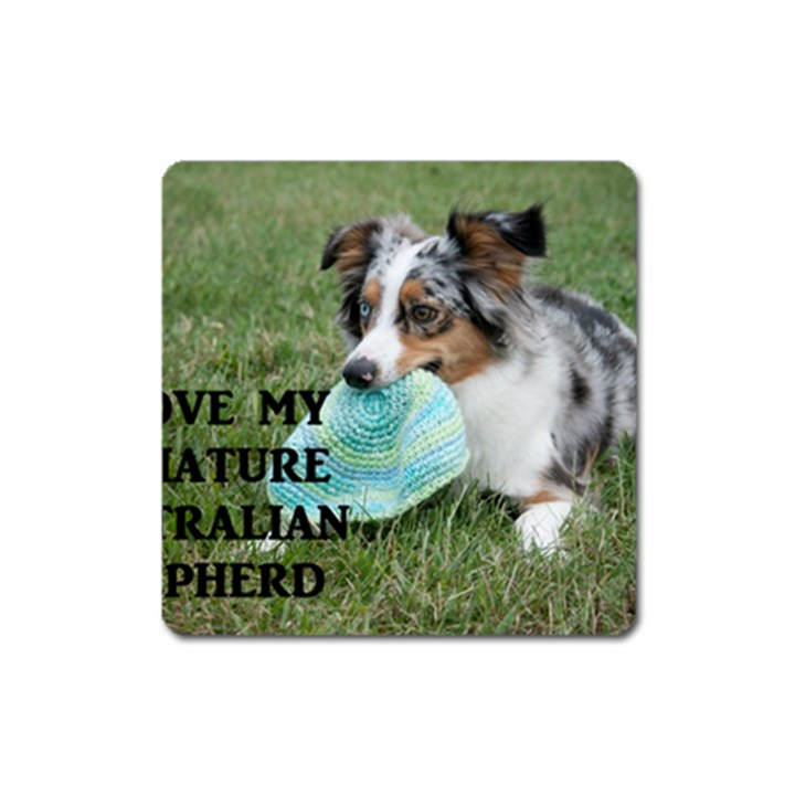 Blue Merle Miniature American Shepherd Love W Pic Square Magnet