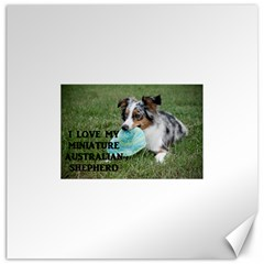 Blue Merle Miniature American Shepherd Love W Pic Canvas 12  x 12