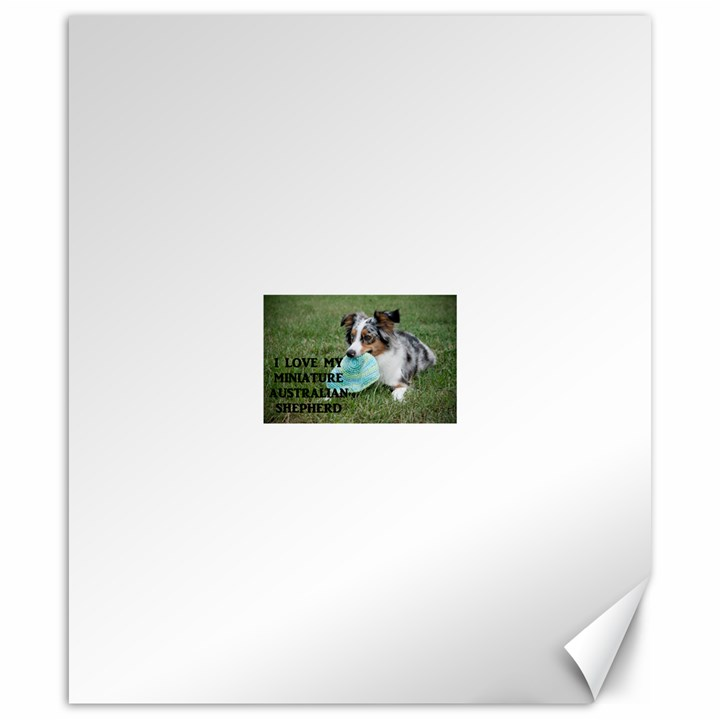 Blue Merle Miniature American Shepherd Love W Pic Canvas 20  x 24