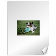 Blue Merle Miniature American Shepherd Love W Pic Canvas 36  x 48