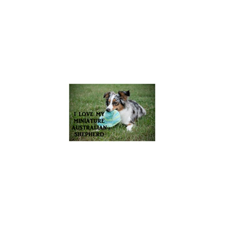 Blue Merle Miniature American Shepherd Love W Pic 5.5  x 8.5  Notebooks