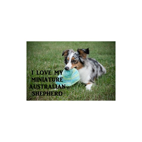 Blue Merle Miniature American Shepherd Love W Pic YOU ARE INVITED 3D Greeting Card (8x4)