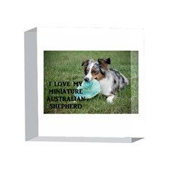 Blue Merle Miniature American Shepherd Love W Pic 4 x 4  Acrylic Photo Blocks