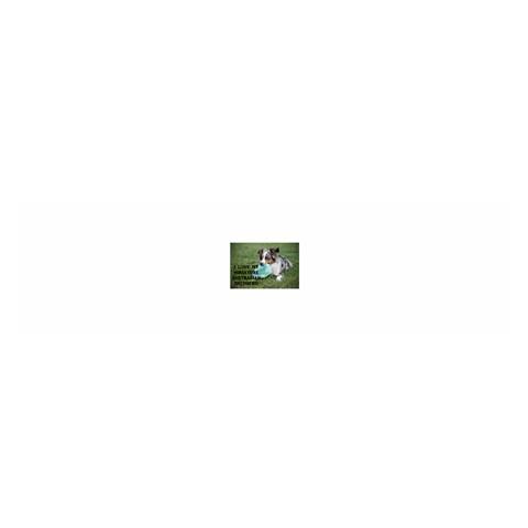 Blue Merle Miniature American Shepherd Love W Pic Satin Scarf (Oblong)