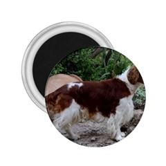 Welsh Springer Spaniel Full 2.25  Magnets