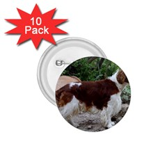 Welsh Springer Spaniel Full 1.75  Buttons (10 pack)