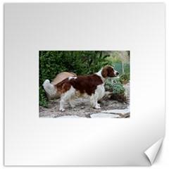 Welsh Springer Spaniel Full Canvas 12  x 12
